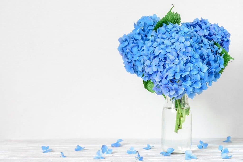 significado-del-color-azul-fidelidad-flor-nomeolvides